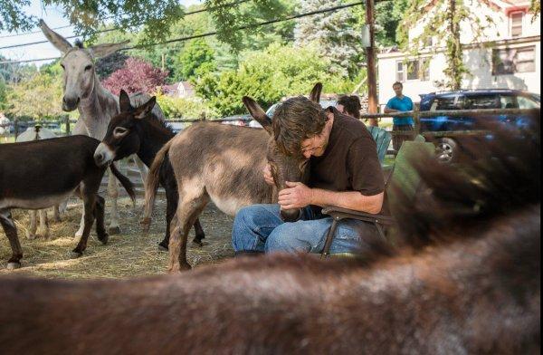 驢子療法:讓毛驢陪你思考人生